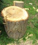 Sawn chopped log Royalty Free Stock Image