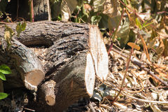 Sawn discarded tree log. By the side of a clearing Royalty Free Stock Photography