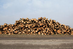Sawn larch logs Royalty Free Stock Photography
