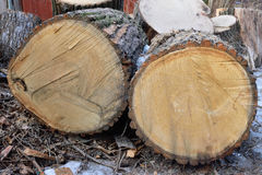 Sawn into large lumps thickest tree Stock Images