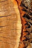 Sawn Log Detail Stock Image