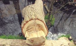 Sawn log Stock Images