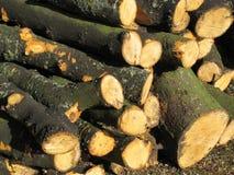 Sawn logs Stock Image