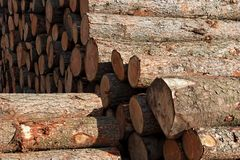 Sawn logs Stock Photography