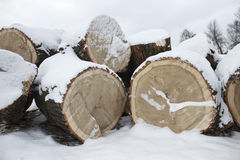 Sawn logs Royalty Free Stock Photography