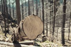 Sawn logs lying in the forest Royalty Free Stock Photography