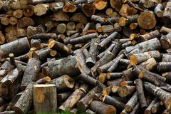 Sawn logs are Outdoors. Firewood. Background Texture. Stock Photos