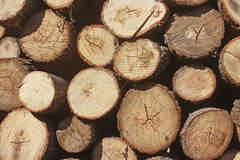 Sawn logs stacked close-up. Royalty Free Stock Image