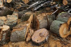 Sawn logs of trees, birch and spruce for firewood royalty free stock images