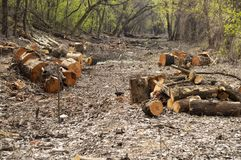 Sawn logs of trees in the forest stock photography