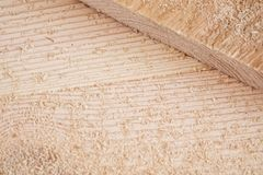 A sawn off plank with a background of pine wood with sawdust royalty free stock images