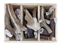 Sawn pieces of antlers of forest deer and elks in wooden box  sold on the street. Isolated with patch stock photo