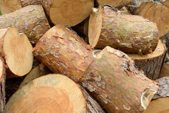 Sawn pine logs heap closeu view Royalty Free Stock Photo