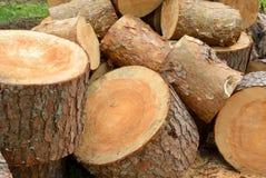 Sawn pine logs heap Stock Photography