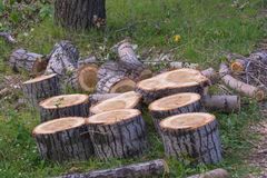 Sawn stumps stock photography