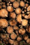 Sawn timber. Sunshined pile of sawn timber Stock Photos