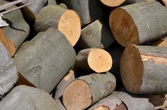 Sawn timber Stock Image