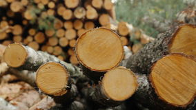 Sawn timber stock video footage