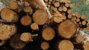 Sawn timber stock footage