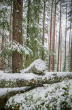 Sawn timber in the snowy forest Royalty Free Stock Image
