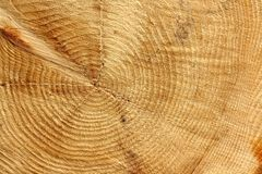 Sawn timber tree center as background Stock Photography