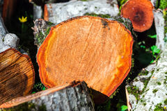 Sawn tree trunk Royalty Free Stock Photos