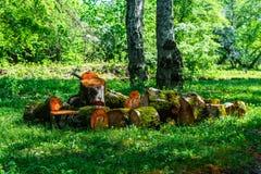Sawn tree trunk Stock Photo