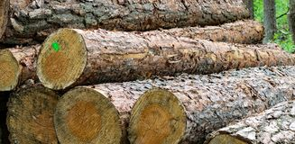 Sawn tree trunks in the forest. These sawn tree trunks are part of the forest economy. The wood is used for houses and furniture, but also for bridges and the Stock Photos