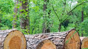 Sawn tree trunks in the forest. These sawn tree trunks are part of the forest economy. The wood is used for houses and furniture, but also for bridges and the Royalty Free Stock Photography