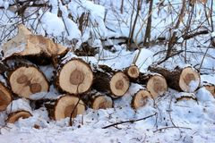 Sawn trees with branches close-up in the snow in the forest Royalty Free Stock Photos