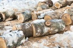 Sawn trunks of birch Stock Photos