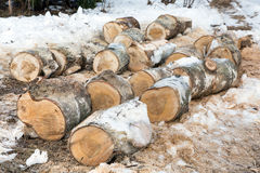 Sawn trunks of birch Stock Images