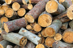Sawn trunks of a pine stock photo