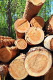 Sawn up tree Stock Image