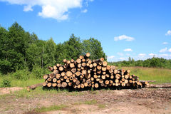 Sawn up tree Royalty Free Stock Image