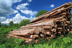 Sawn up tree Stock Photography