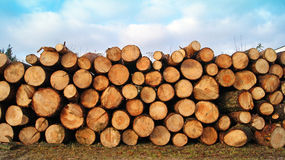 Sawn up tree Stock Photo