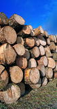 Sawn up tree Royalty Free Stock Images