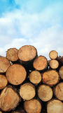 Sawn up tree Royalty Free Stock Photography