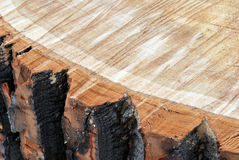 Sawn wood Royalty Free Stock Photography