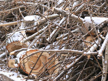 Sawn wood logs and small twigs Stock Photo