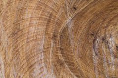 Sawn wood texture as background Stock Image