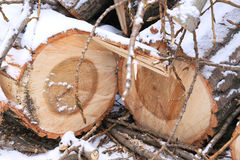 Sawn wooden logs with annual rings and small twigs Stock Images