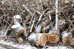 Sawn wooden logs and small twigs Royalty Free Stock Photos