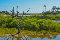 Sawpitkreek in Groot Talbot State Park, Jacksonville, Duval-Provincie, Florida de V.S. royalty-vrije stock foto