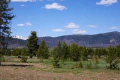 Sawtooth Mountains - Idaho. A picnic and camping area in Idaho`s Sawtooth Mountains, near Stanley Royalty Free Stock Image