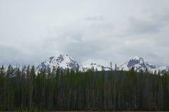 Sawtoothberg, Stanley, Idaho Arkivbilder