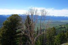 Sawtooths vom Galena-Gipfel Stockfoto