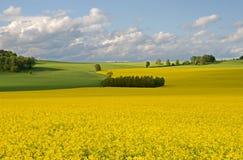 Saxon Switzerland, Germany Royalty Free Stock Photos