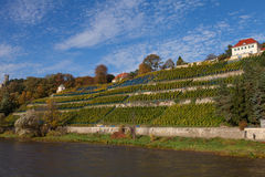 Saxon Wine Route on the Elbe Royalty Free Stock Image